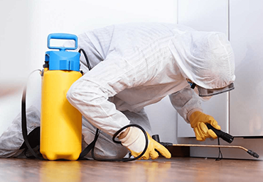 Pest Control in Jaipur, PEST CONTROL IN JAIPUR: 5 WAYS TO DETECT PRESENCE OF PESTS