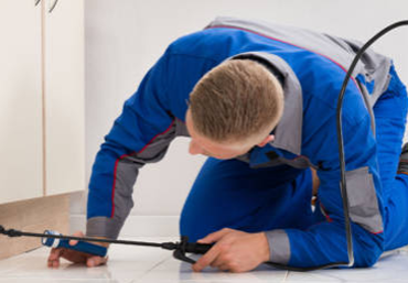 Pest Control Services in Jaipur, HOW TO CHOOSE THE BEST PEST CONTROL SERVICES IN JAIPUR?