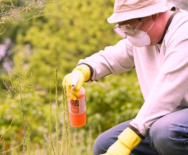 Pest Control Services, DECIDING ON COMPETENT PEST CONTROL SERVICES