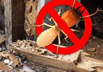 Termite Control in Jaipur, INFESTATION CALLS FOR TERMITE TREATMENT IN JAIPUR