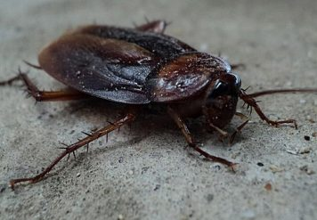 Cockroach Control in Jaipur, TECHNIQUES TO STOP THE SCUTTLE: COCKROACH CONTROL