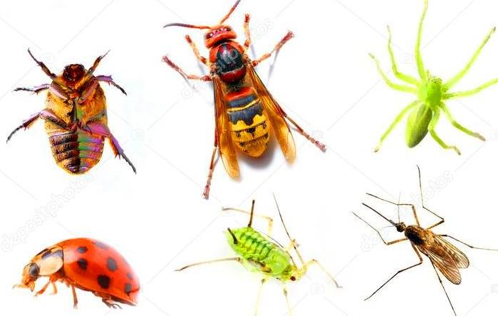 , 8 WAYS ON HOW PEST CONTROL SERVICES CAN HELP YOU GET RID OF PESTS