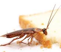 Cockroach Control in Jaipur, COCKROACH CONTROL IN JAIPUR: DO IT YOURSELF APPROACH