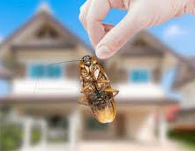 Bed Bug Control in Jaipur, 6 CREEPY CHARACTERISTICS OF BED BUGS