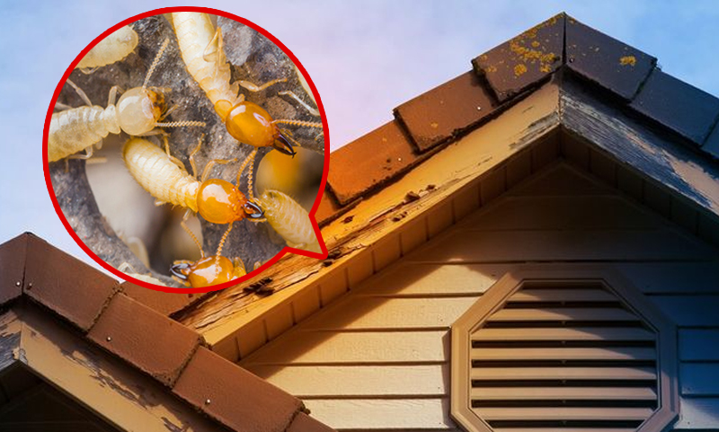 , Checklist to Prevent Termites Early on at Your Premises