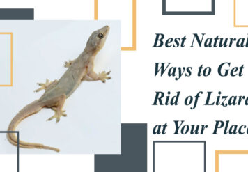 , Best Natural Ways to get rid of Lizards at your Place