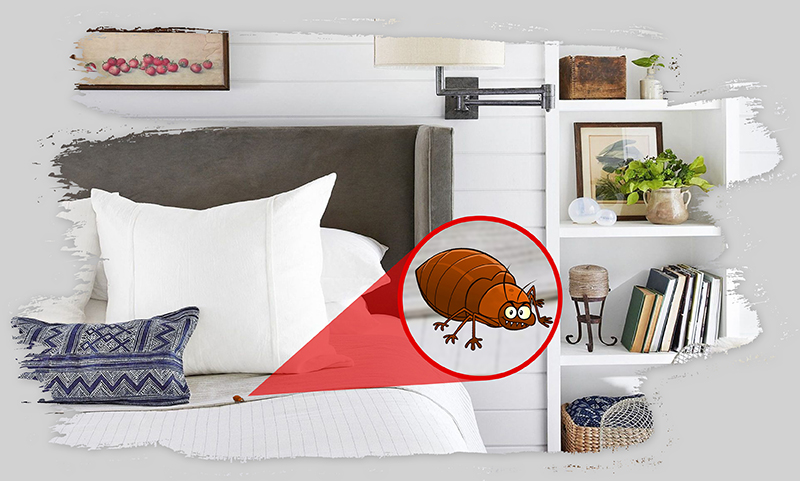 , Is There Any Fixed Solution For Bed Bugs Problems?