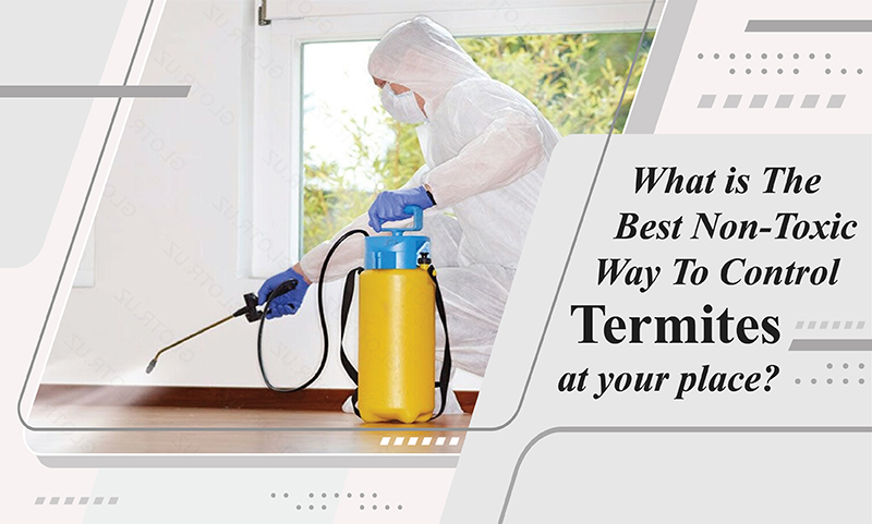 , What Is the Best Non-Toxic Way to Control Termites at Your Place?