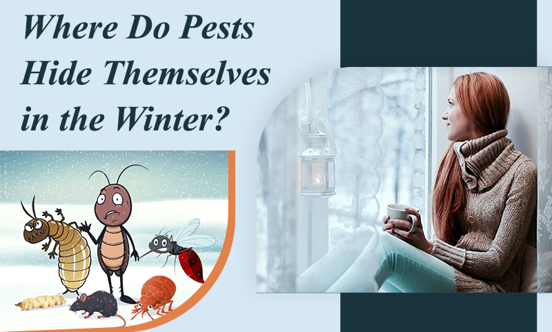 , Where do Pests hide themselves in the Winter?