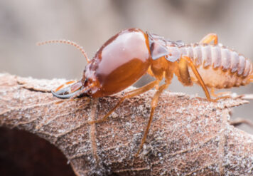 , How Bad Can Termites' Damage Be?
