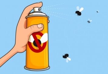 , How to Help Remove Fruit Flies from Your Home in Bikaner?