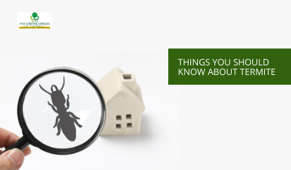 Termite Control, 12 Things You Should Know About Termite Control