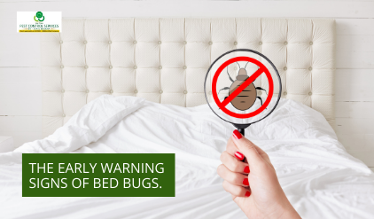 bed bugs, The Early Warning Signs of Bed Bugs to Look Out For