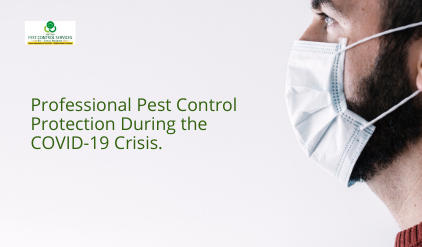 Professional Pest Control, Professional Pest Control Protection During the COVID-19 Crisis